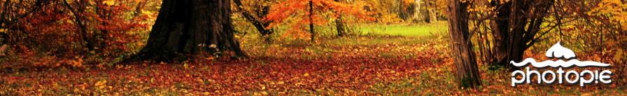 autumnheader.jpg