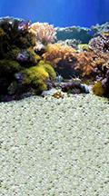 coral-reef-backdrop.jpg