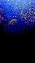school-of-fish-backdrop.jpg
