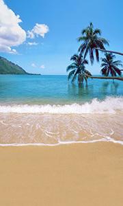 tropical-paradise.jpg